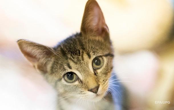 Коты могут заражать людей коронавирусом – ученые
