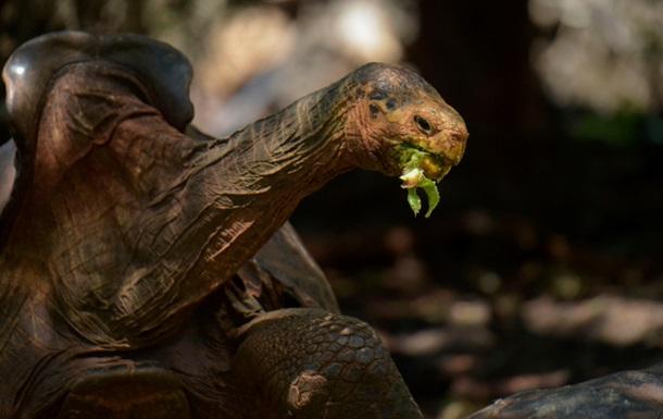 Самец черепахи спас свой вид от вымирания