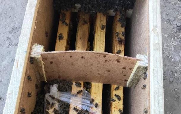 Пчелы в посылках Укрпочты начали оживать