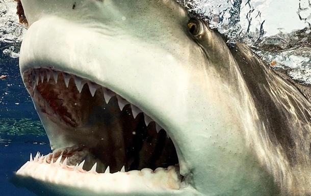 Американец столкнулся с огромной акулой