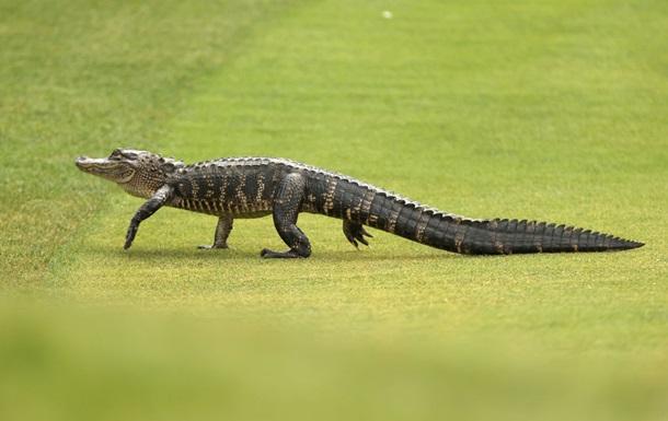 Житель Флориды украл аллигатора и пытался «преподать ему урок»